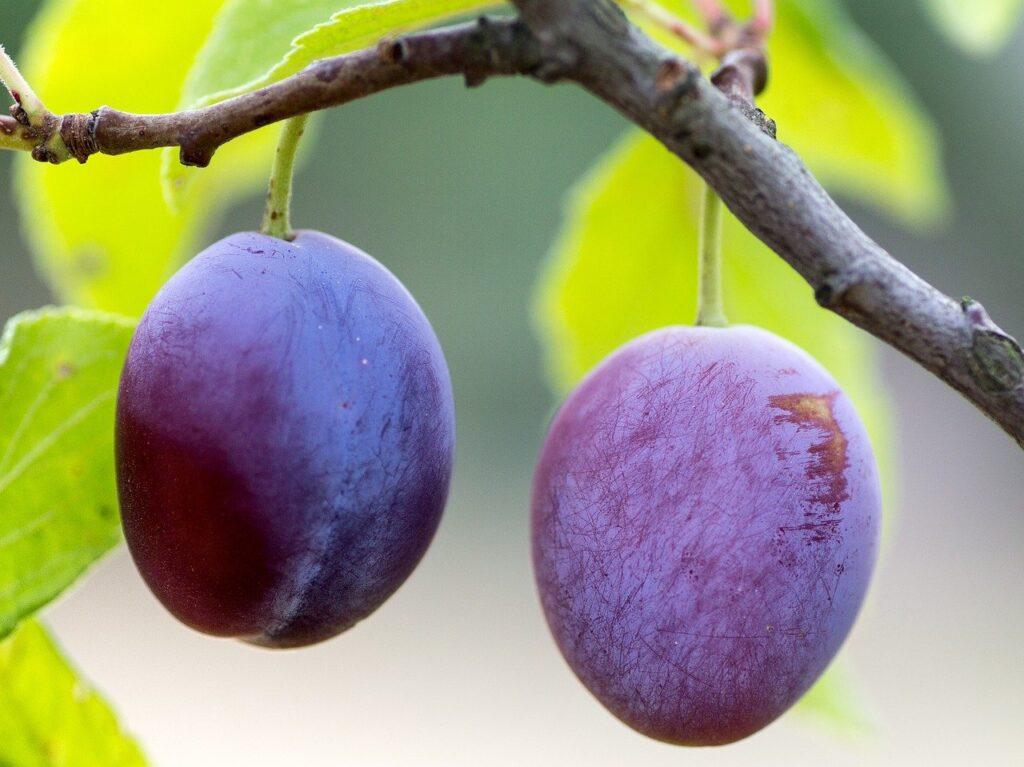 plums, fruit, ripe